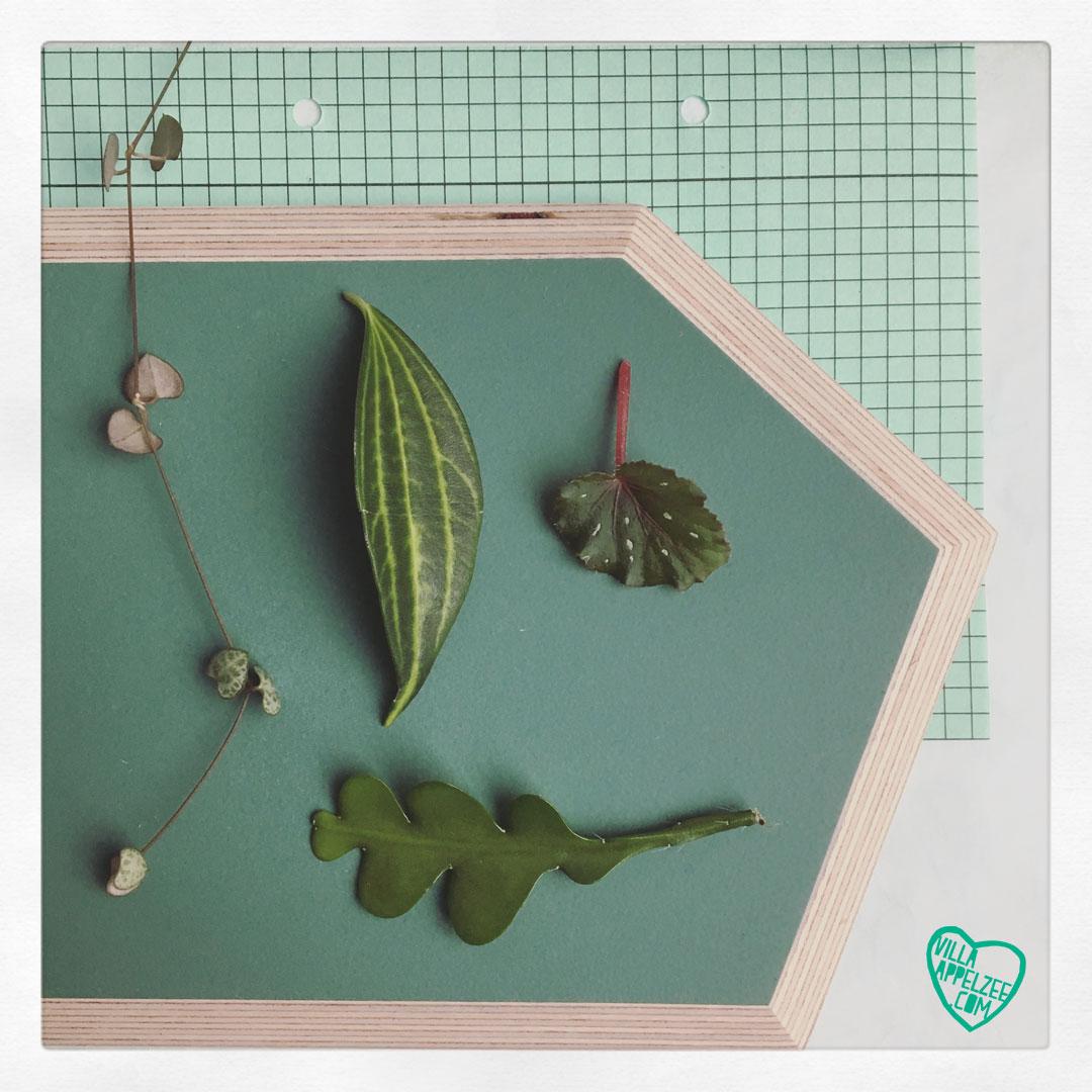 Collage in groen met planten van Villa Appelzee