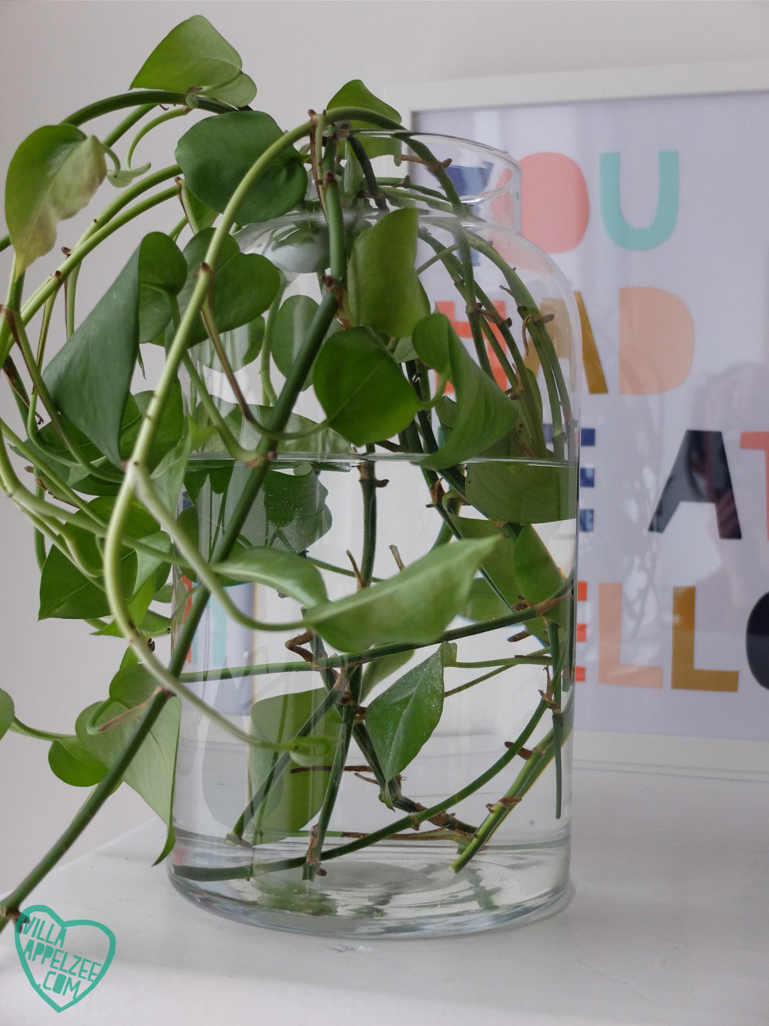 Glass jar with Epipremnum cuttings, Villa Appelzee