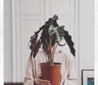 Plantselfie with Alocasia Amazonica