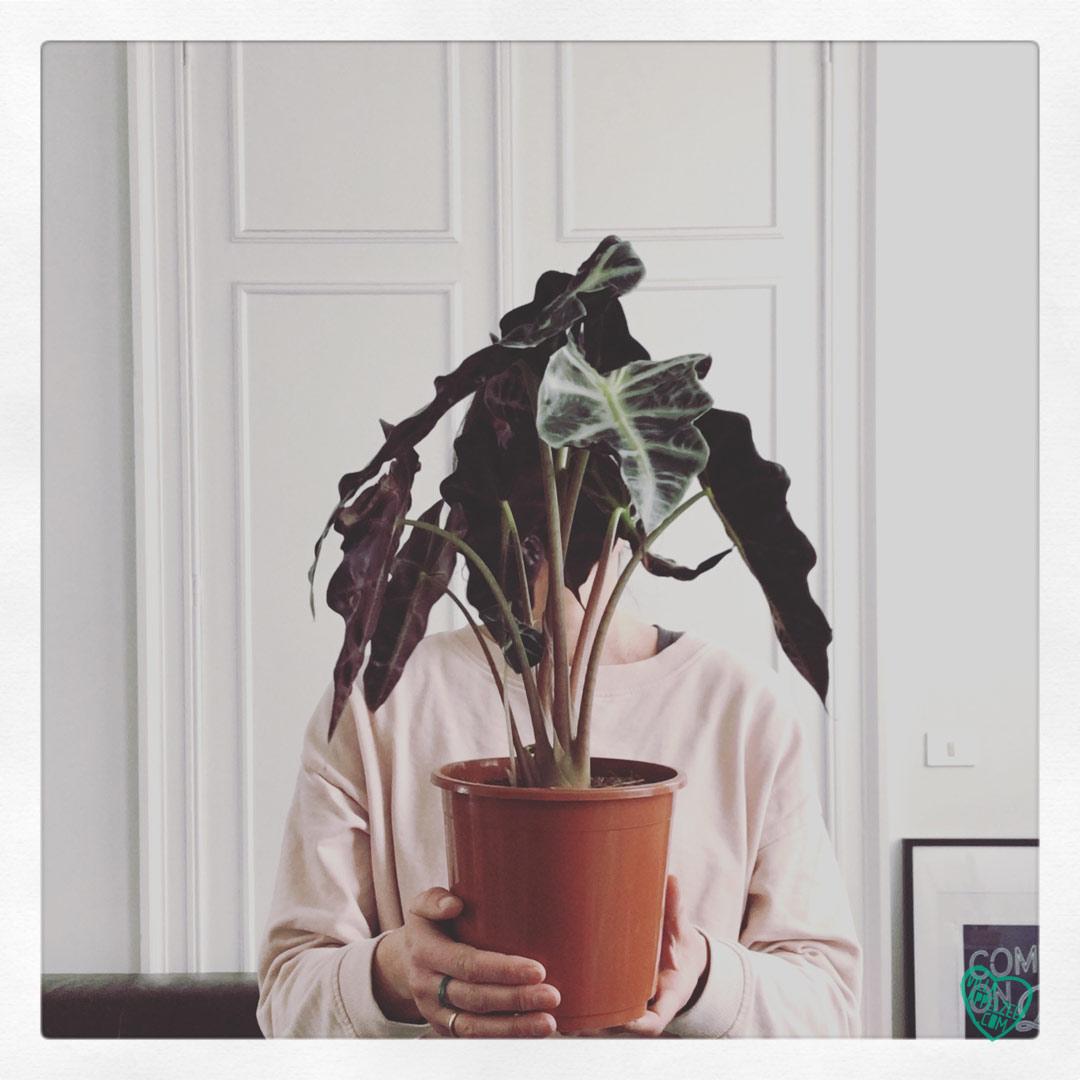 Plant selfie with Alocasia Amazonica