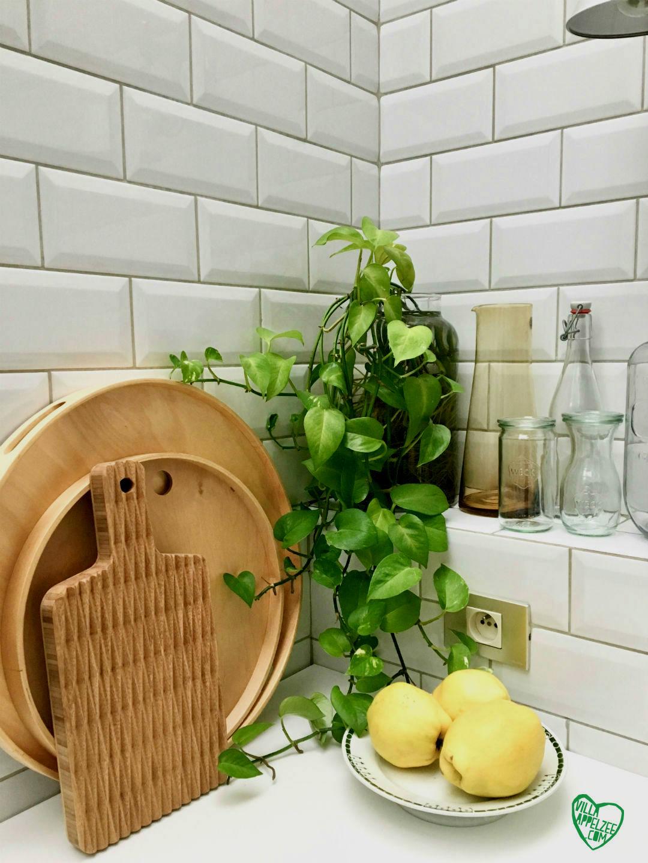 Epipremnum in water, appelzee.com